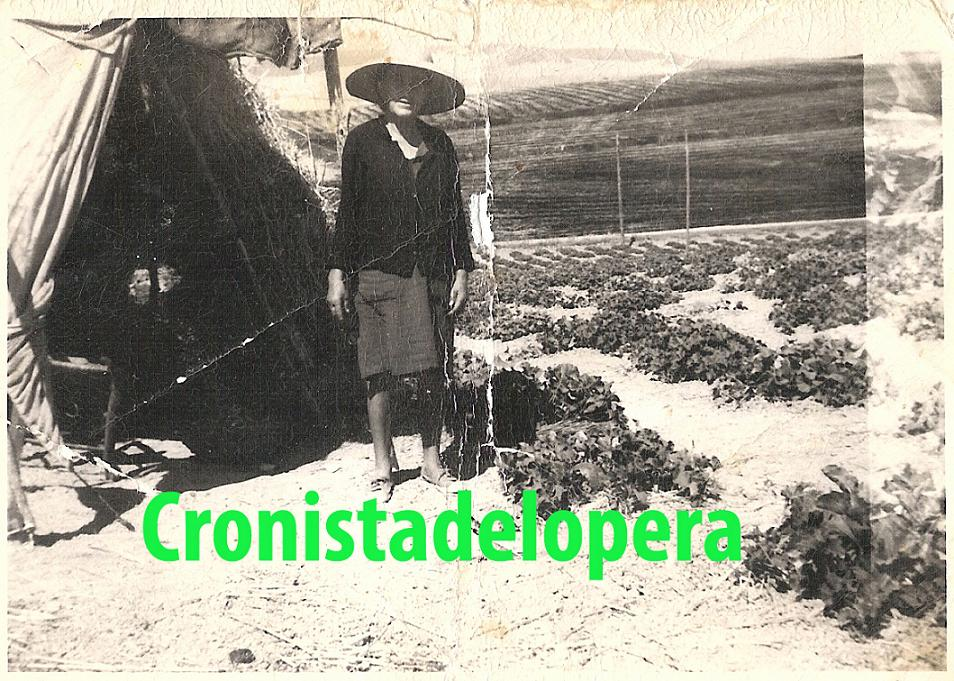 20130206121840-juana-chiquero-hernanez-en-un-melonar-en-la-parra.jpg