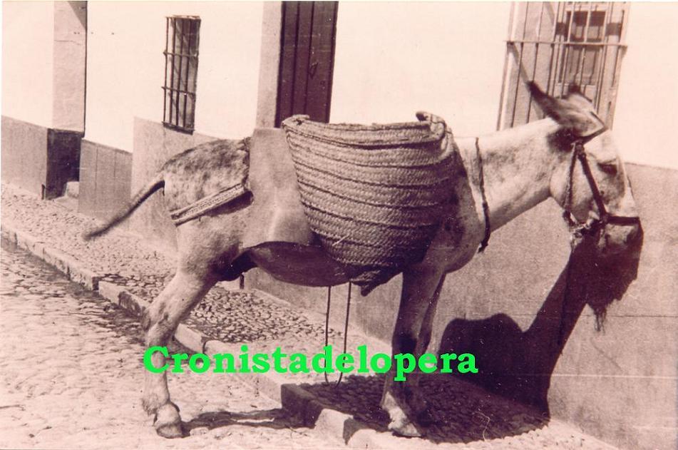 20141121162603-burro-en-calle-pilar-copia.jpg