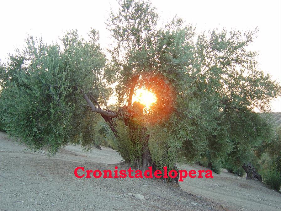 20150118104042-olivo.jpg